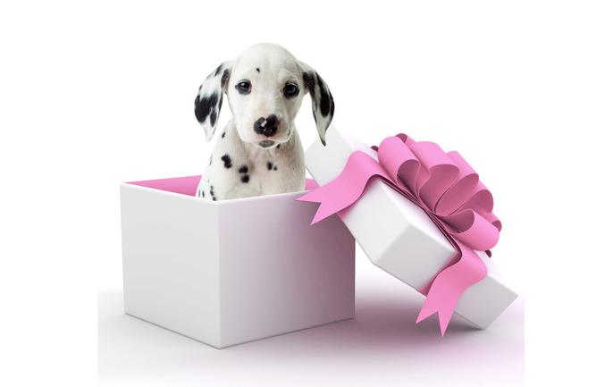 cadeau chien rosetitre le blog du site direct vetle blog du site direct vet. Black Bedroom Furniture Sets. Home Design Ideas