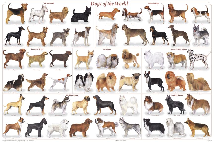 Comment bien choisir un chien ? - Le blog du site Direct-Vet.frLe blog ...