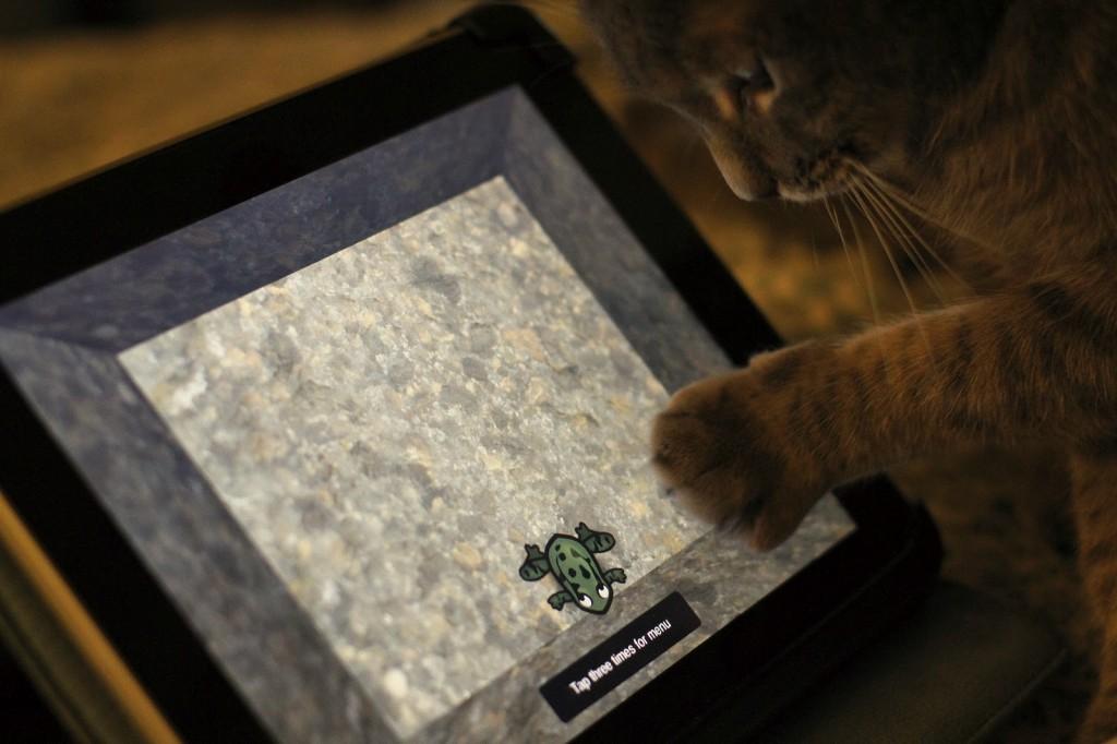 Chat jouant à l'iPad