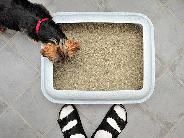 comment emp cher son chien de manger les crottes dans la liti re du chat le blog du site. Black Bedroom Furniture Sets. Home Design Ideas