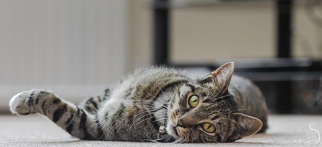 Conseil vétérinaire chat gratuit