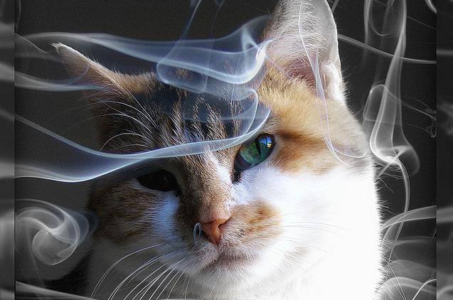 chat tabagisme passif