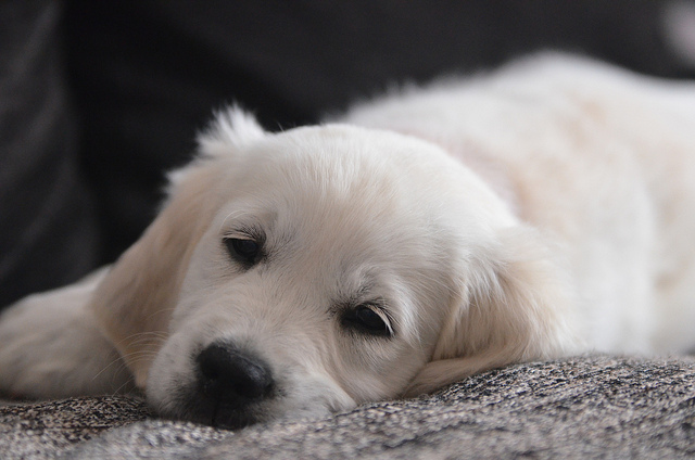 2016 cette ann e les noms de chien commencent par la lettre m le blog du site direct vetle. Black Bedroom Furniture Sets. Home Design Ideas