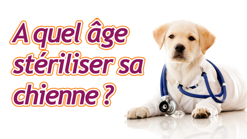 Ou faire vacciner son chat gratuitement