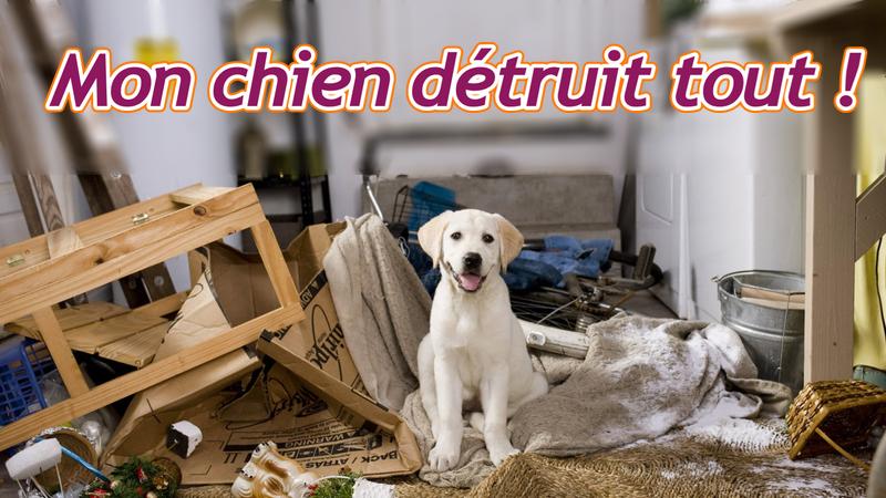 Défi #21 / Mon chien détruit tout en mon absence, que