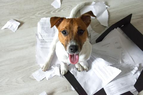 punir un chien qui fait des bêtises